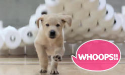 Training Puppies with Andrex®: Behind the Scenes